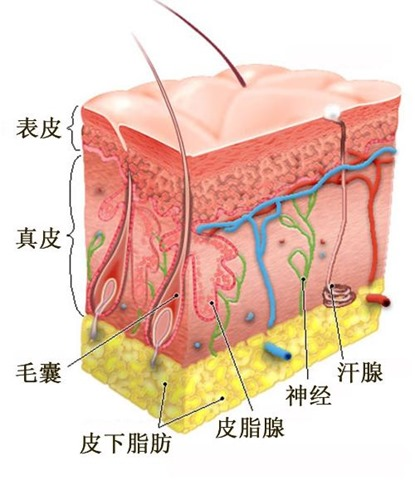 护肤品吸收