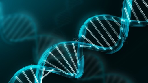 DNA修复