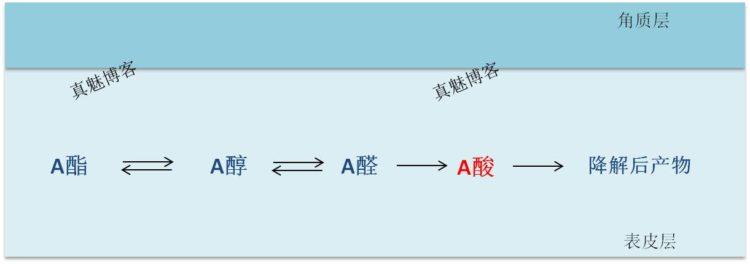 A醇,A醛,A酸以及A酯的关系