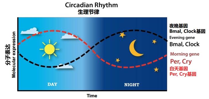 夜间护肤原理图