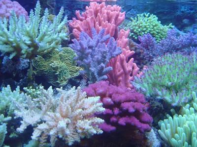 防晒剂对珊瑚的危害