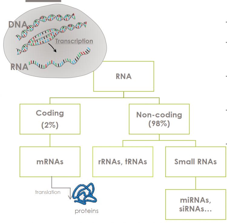 雅诗兰黛第7代小棕瓶 RNA分类